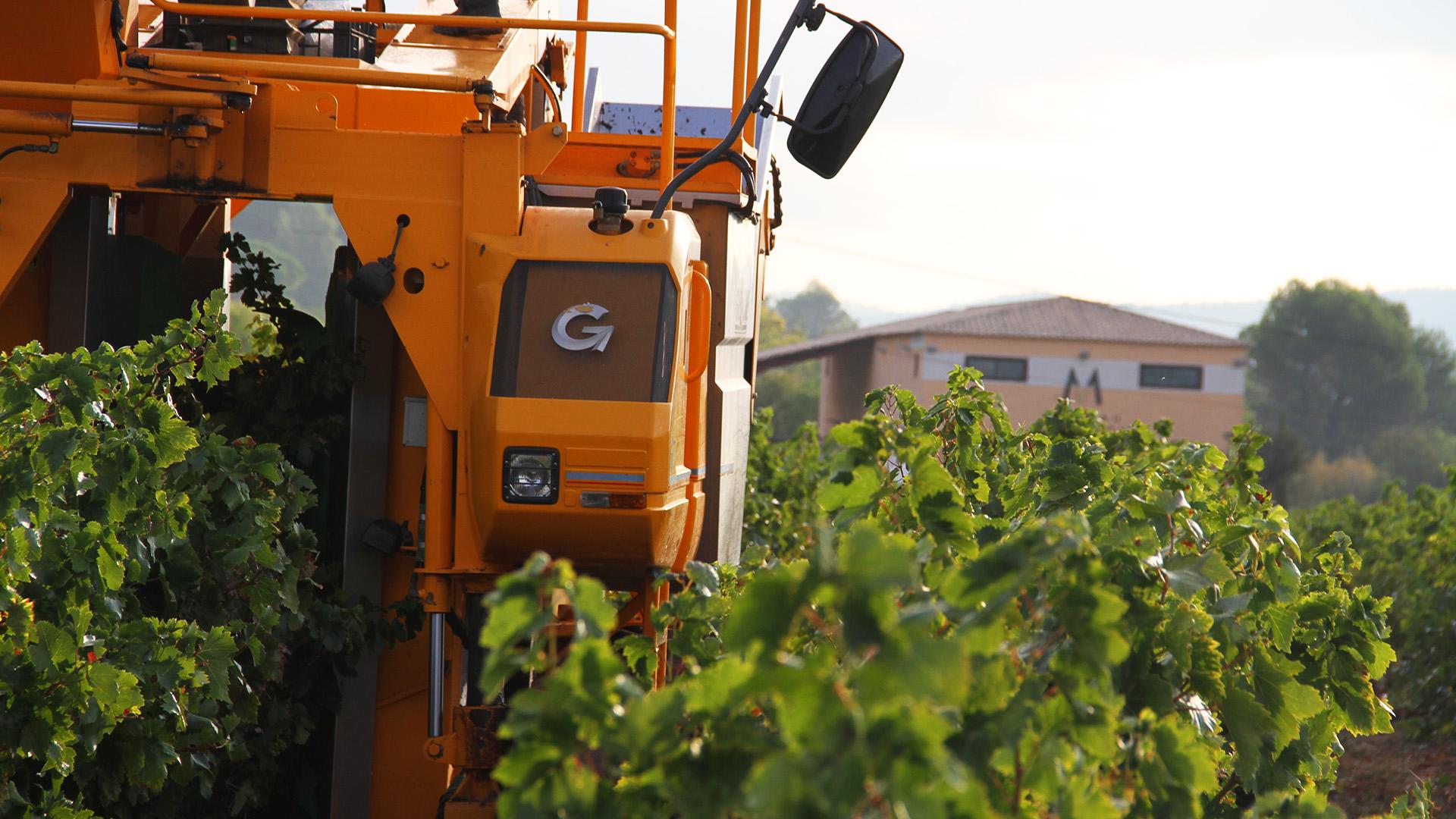Récolte Vin - Château Matheron